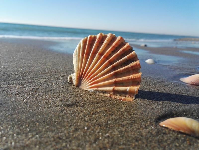 Пляжи Анцио считаются самыми чистыми на Тирренском побережье, им присвоен Голубой флаг