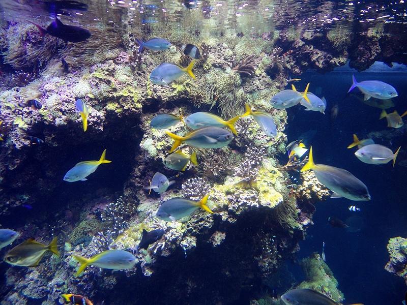 В аквариуме музея около 6000 видов рыб, 200 подвидов беспозвоночных, 100 видов кораллов. Только здесь существует Лагуна акул