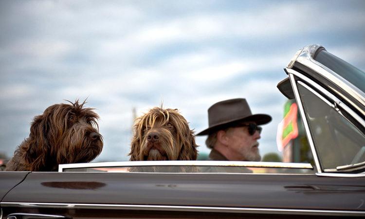 В отпуск с собакой: как перевозить домашнее животное в самолете и других видах транспорта