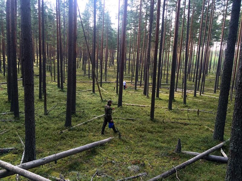 Самое главное в лесу — это теплые вещи и непромокаемая обувь