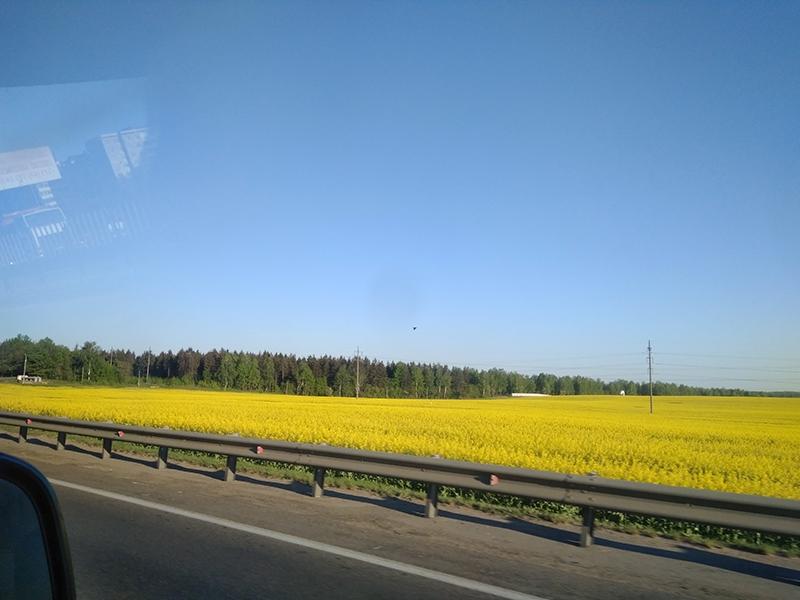 Окрестные пейзажи по дороге радуют глаз - засеянные и распаханные поля везде, даже на самом подъезде к Минску. Чего, к сожалению не скажешь про нашу территорию, где, в основном, мы наблюдали обочины, поросшие борщевиком
