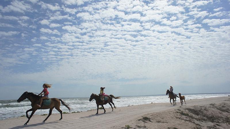 Верховая езда и джипинг - главные развлечения за пределами морского сектора