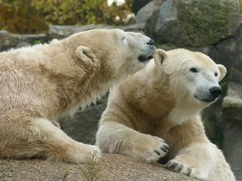 Зоопарк в Берлине входит в тройку лучших зоопарков Европы