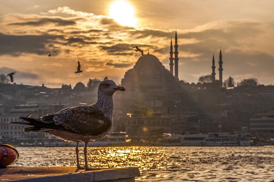 Стамбул. Панорама города в закатных лучах