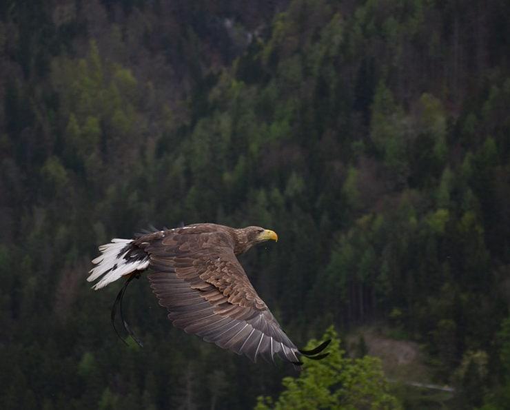 Большинство местных жителей скажут, что название «Адлер» произошло от немецкого слова «орел»