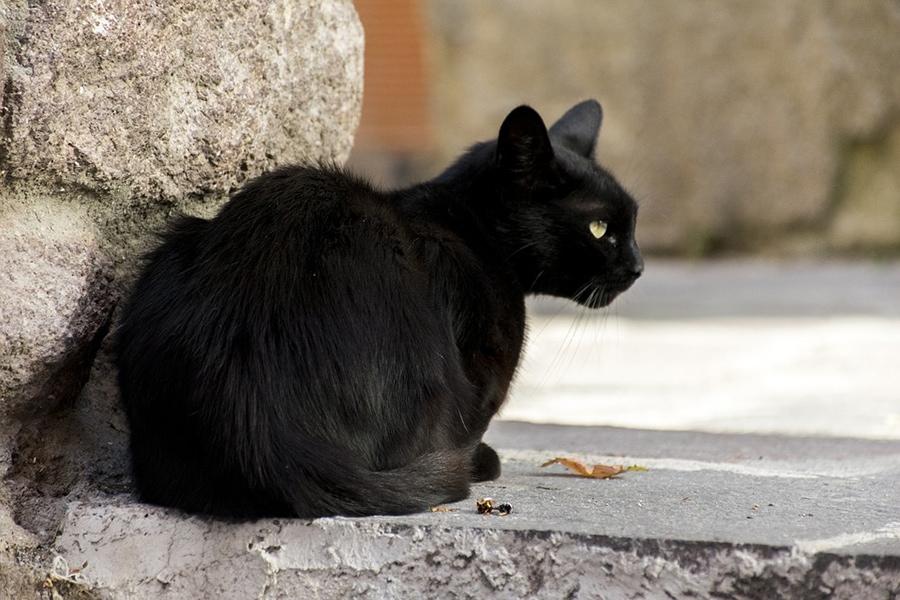 Черные кошки в Италии под защитой
