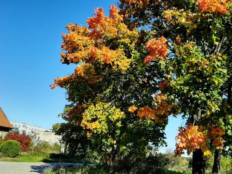 Переезд в Калининград – осень