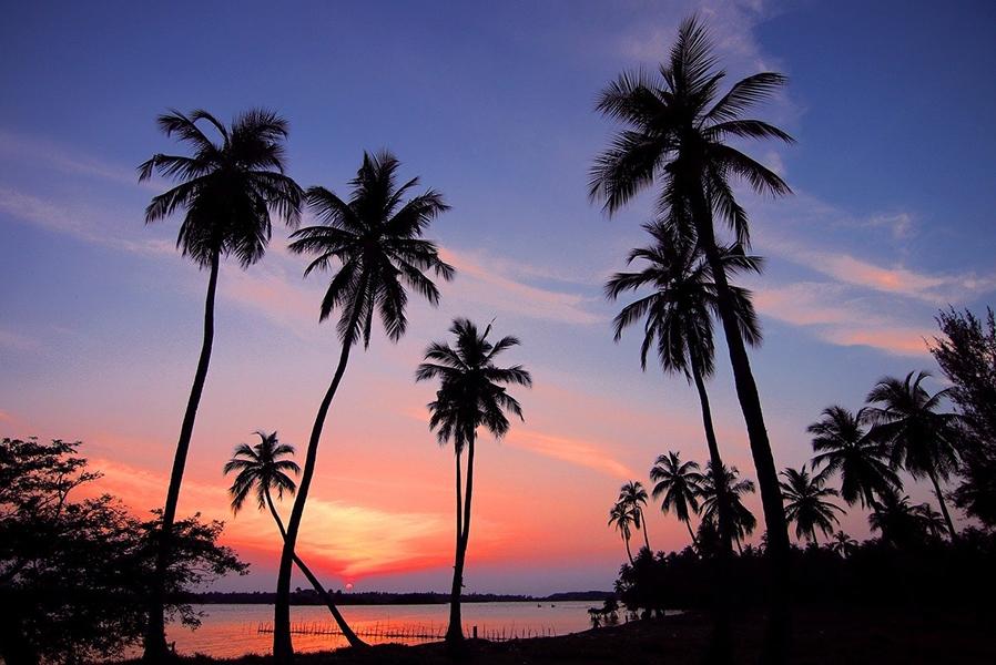 Шри-Ланка. Пальмы на пляже и розовый закат