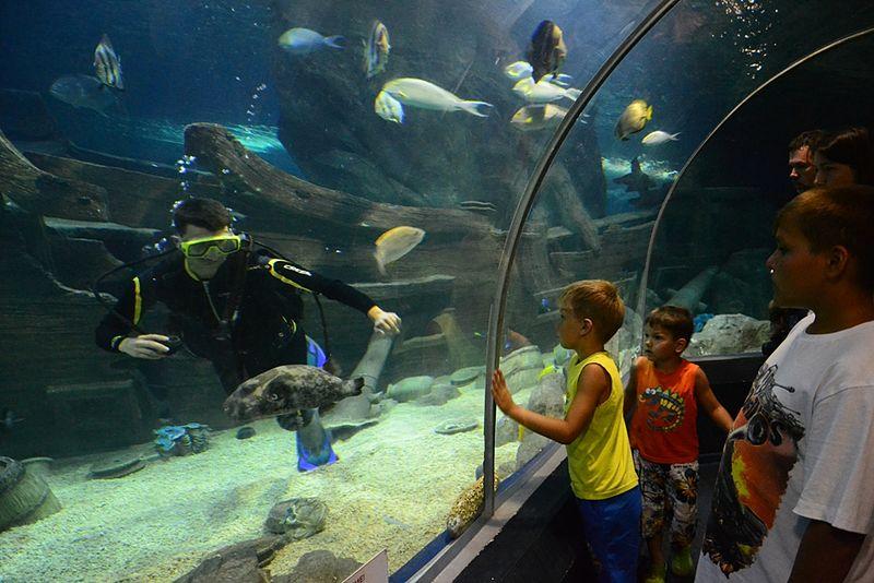 Тоннель через аквариум