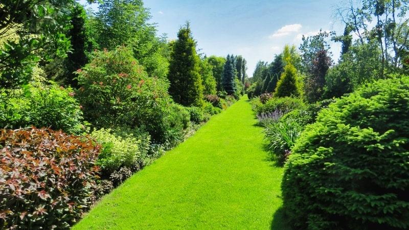 Сады Польши – питомник Шмидта